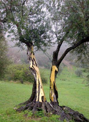 Artist Work Dani Karavan Giardino di Daniel Spoerri Italy