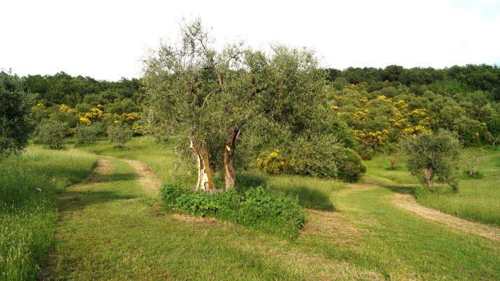 Dani Karavan im Giardino di Daniel Spoerri 72