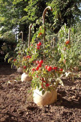 Daniel Spoerri Tomaten, Urnen Giardino 87