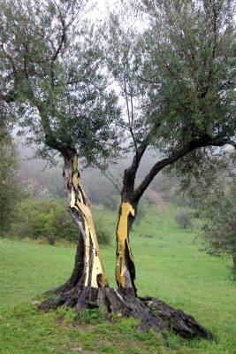 Sculpture Garden Giardino Daniel Spoerri Italy View