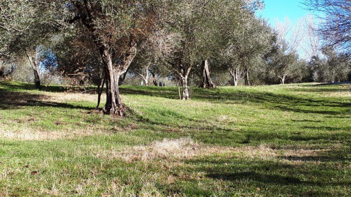 news, olive workshop, Giardino di Daniel Spoerri